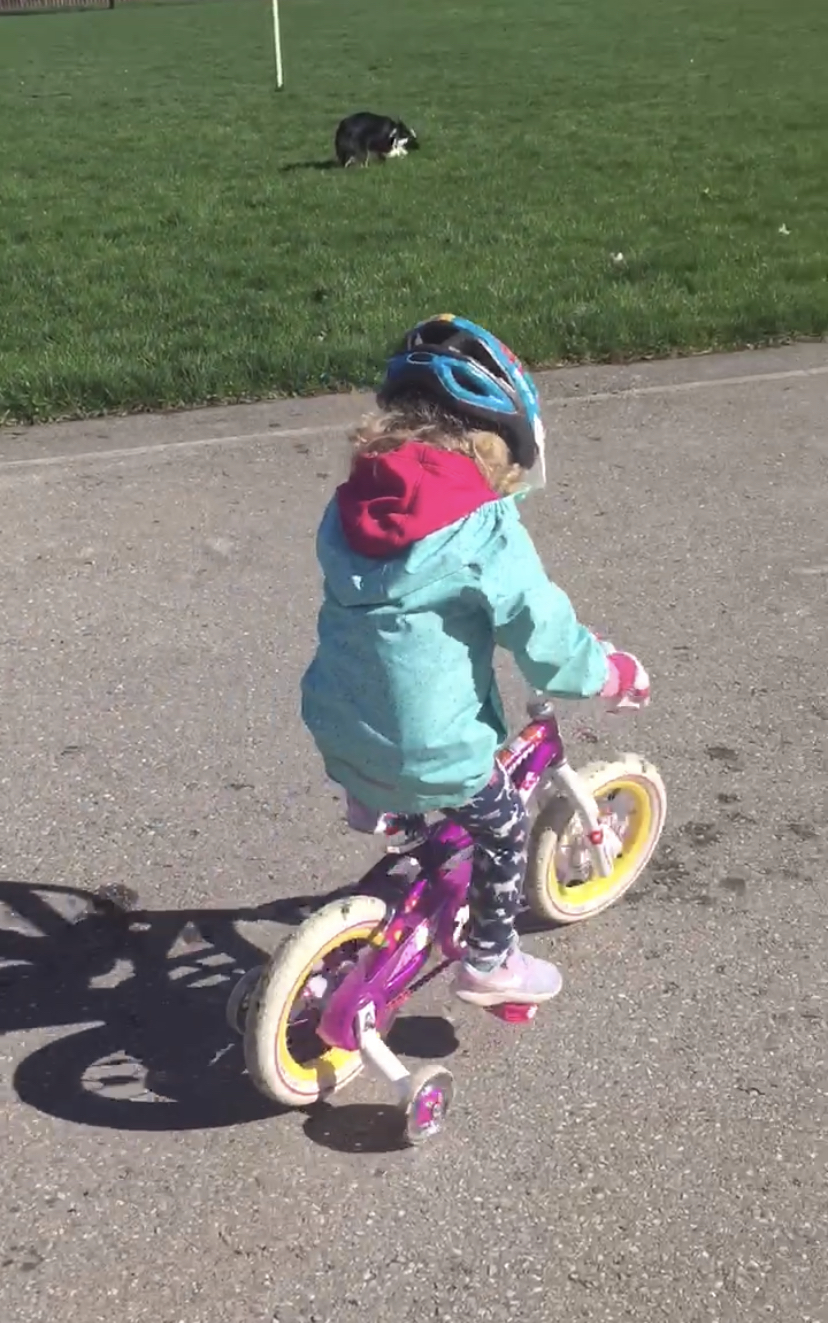 Toddler in blue jacket and helmet riding a bike with training wheels